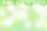 新緑の背景イラスト